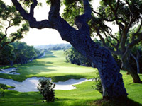 Valderrama Golf Club - Green Fees