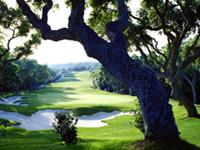 Valderrama Golf Club - Green Fees