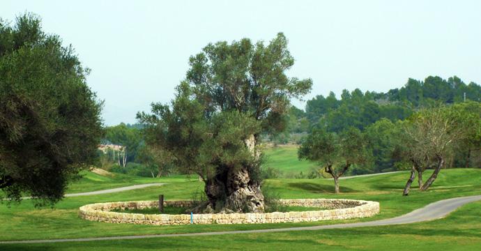 Son Muntaner Golf Course