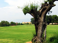 Escorpion Golf Course - Green Fees